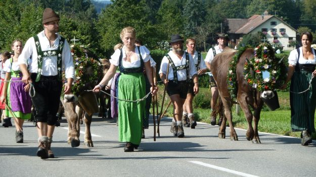 Viehscheid-Maierhoefen the cow train arrives and comes closer