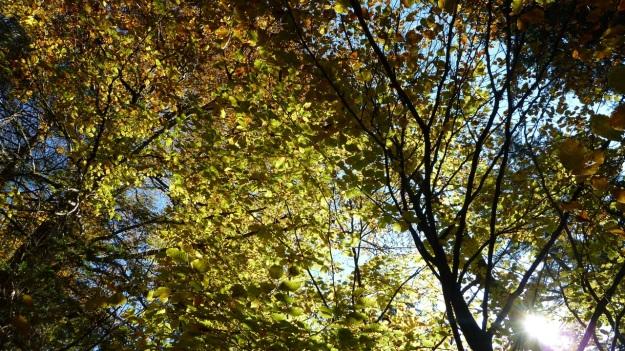Sibratzsgfäll Schönenbach autumn leafes1