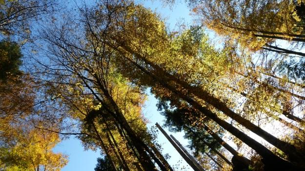 Sibratzsgfäll Schönenbach autumn leafes3