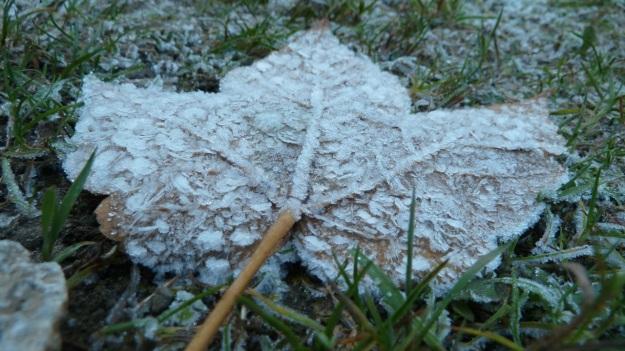 Sibratzsgfäll Schönenbach frozen leaf