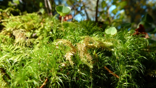 Sibratzsgfäll Schönenbach moss in the forest