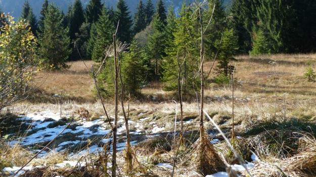 Sibratzsgfäll Schönenbach swamp or hochmoor