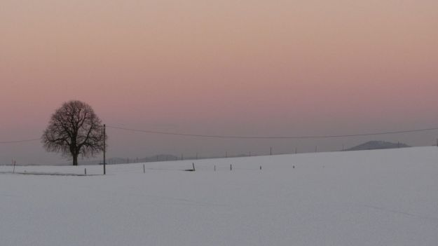 cross country skiing allgaeu sundowner lonely tree