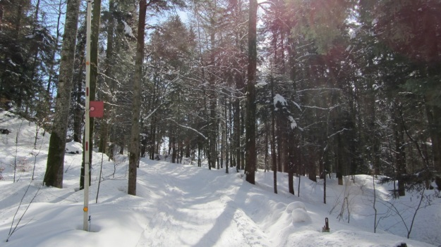 ski touring in the bregenzer wald - lecknertal entry