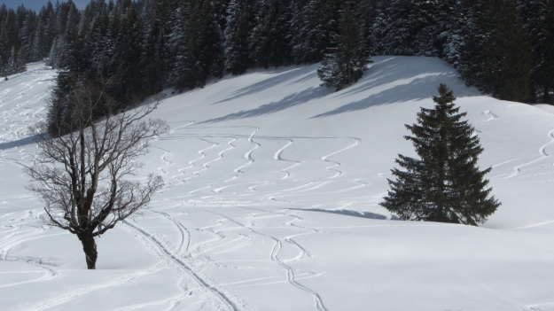ski touring in the bregenzer wald -  tracks in the snow