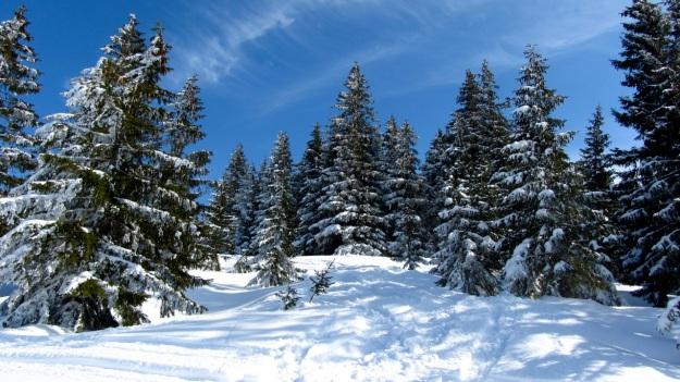 ski touring in the bregenzer wald - forrest frozen