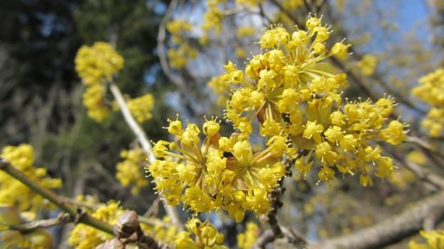 spring time 2012