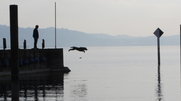 barbecue with friends at the lake of constance - dog jumping from the pier to get a stick