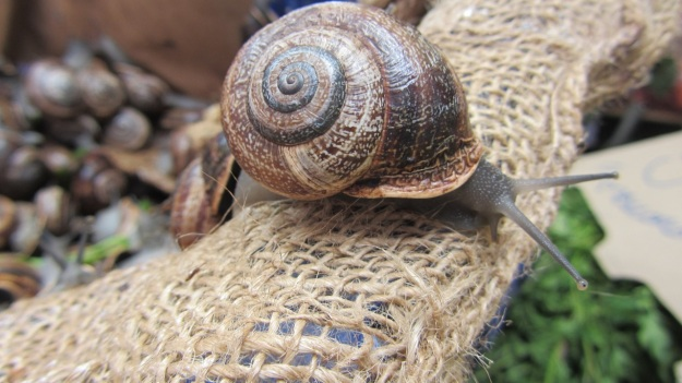 best of mallorca - snail, slowfood