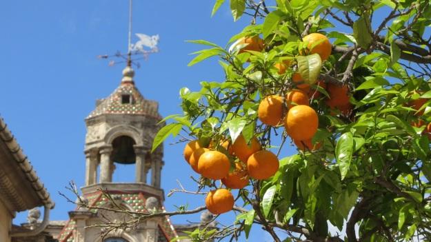 best of mallorca - orange tree with clocktower