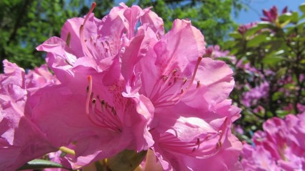 lindau bad schachen stroll - flowers