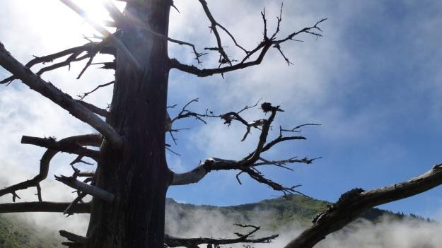 hiking to the mörzelspitze in austria vorarlberg03 old tree and sky