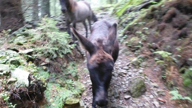 hiking to the mörzelspitze in austria vorarlberg06 donkey and horse