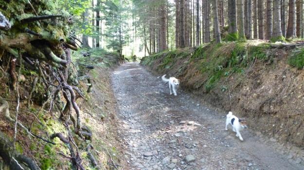 hiking to the mörzelspitze in austria vorarlberg08 -  kitty und paul