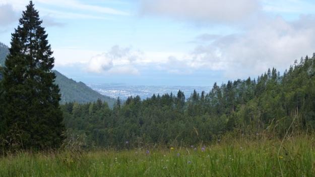 hiking to the mörzelspitze in austria vorarlberg09 meadow