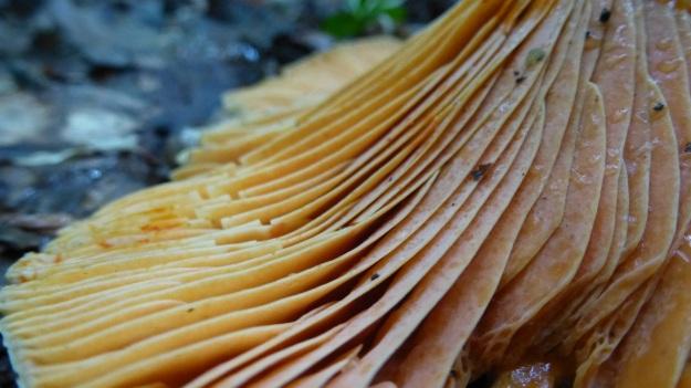 mushroom closeup - macro