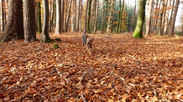 Sundaywalk with the dogs running free