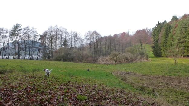 Sundaywalk with the dogs swamp schleiensee