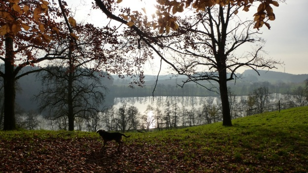 Sundaywalk with the dogs schleiensee and bodensee and alps view