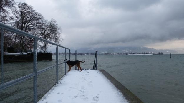 A snowday walk 8