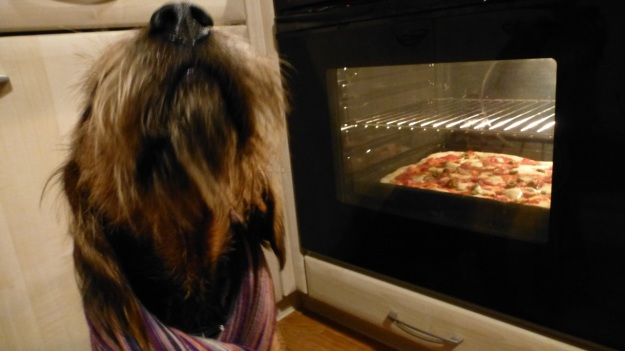 Bread and Pizza Workshop Tillman the bearded dog