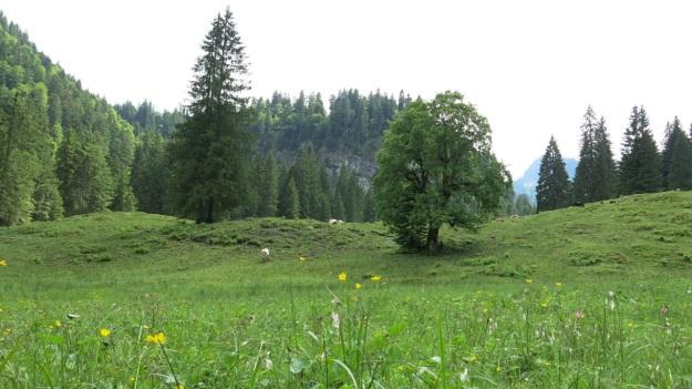 Hiking Sibratsgfäll Austria Alm Sennerei01