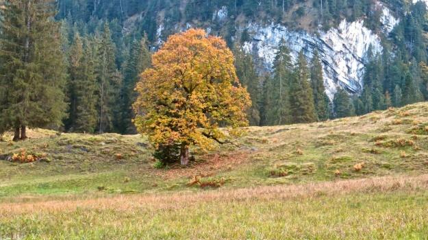 Hiking Schönbach, Kässpätzle Ibelo Feuerzeug 661