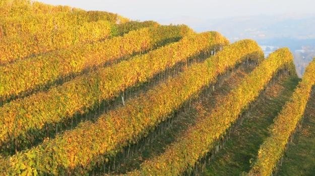 Piemont Italy 2013 918